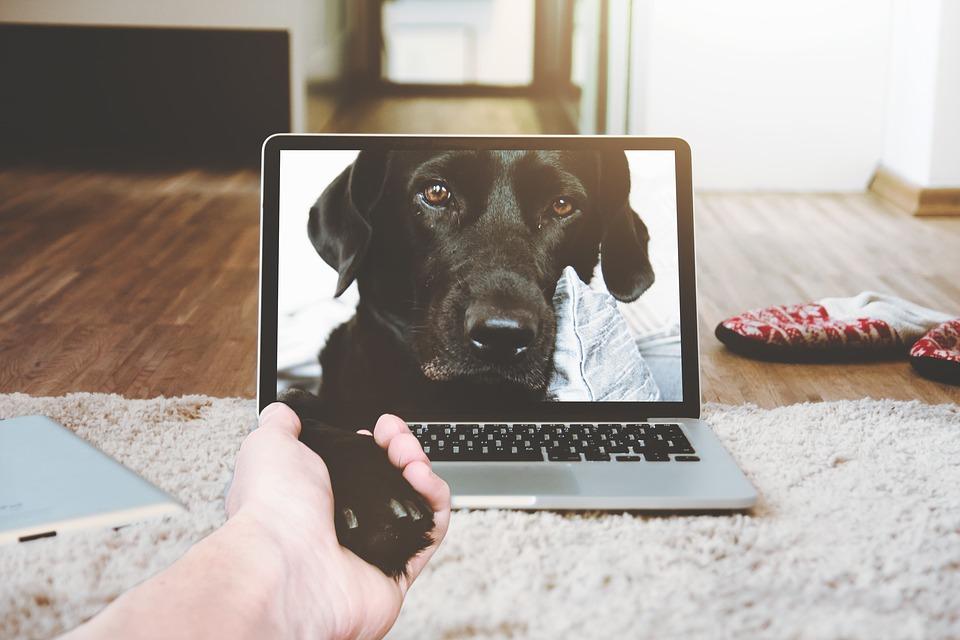 Online-hundetraening
